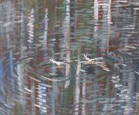 Two little birds.JPG