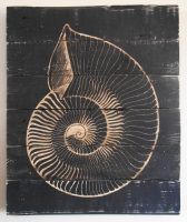 nautilus shell - twisted spiral studios - katharine kennie.JPG