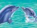 lifes porpoise.jpg