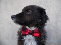 Buffalo Plaid Dog Bow Tie