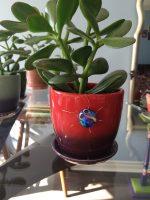 plant&bug2.JPG
